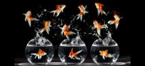 Какими будут домашние животные будущего?