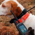 Что такое электронный ошейник для дрессировки собак и как выбрать лучший